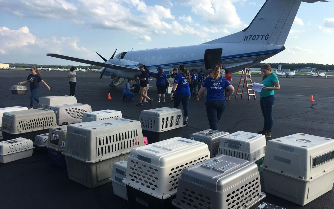 Volunteers transport shelter animals threatened by Barry