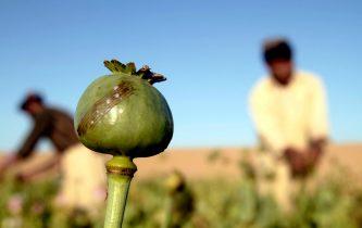 China may help Taliban boost opium exports
