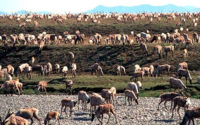 ANWR Seismic Tests for Oil Could Begin in December